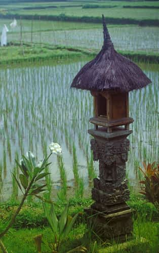 Shrine of The Rice Field